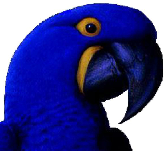 Spix's Macaw -Cyanopsitta spixii. What do we know today about this ...