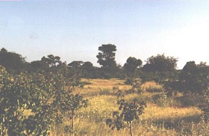 Typical caatinga landscape