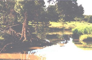 The creek along which the nesting trees of the Spix's Macaw grow
